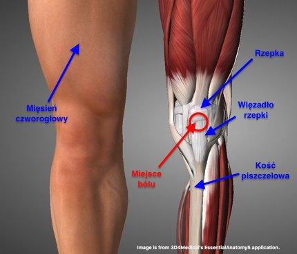 kolano skoczka